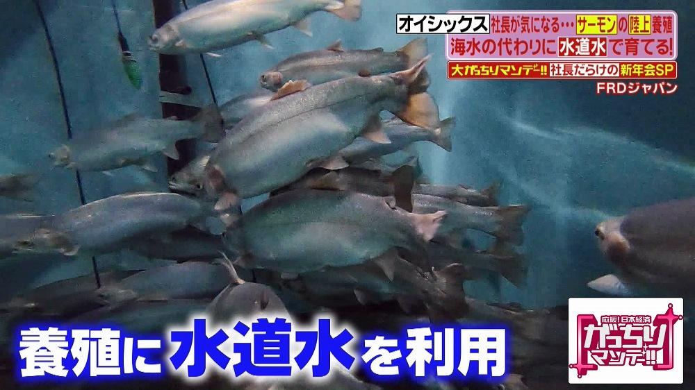 ジャパン frd