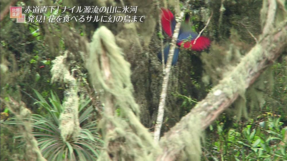 標高3300mの地点では、鮮やかな赤い羽を持つ鳥を発見。
